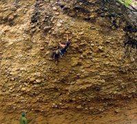 Rock Climbing Photo: Chia Pet