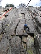 Rock Climbing Photo: Route is on left side of photo under the pine tree...