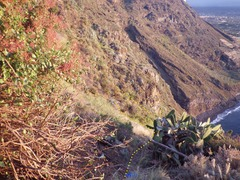Rock Climbing Photo: The approach trail from the overlook to the crag. ...