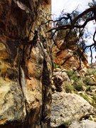 Rock Climbing Photo: Richard Shore leading Crack Queen 5.11a