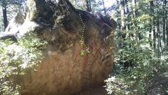 Rock Climbing Photo: Deforestation