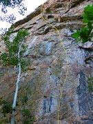 Rock Climbing Photo: Lone Shooter.