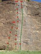 Rock Climbing Photo: 1. Bat For Breakfast 5.10b 2. Logarithm 5.10a 3. U...