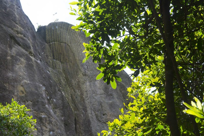 Rock Climbing Photo: Huge Spiders at monkey buttress in June