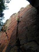 Rock Climbing Photo: Leading birch tree. Photo by Katelyn.