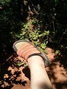 Left shoe lost.