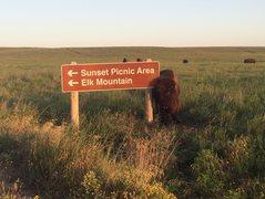 Rock Climbing Photo: Buffalo Posing