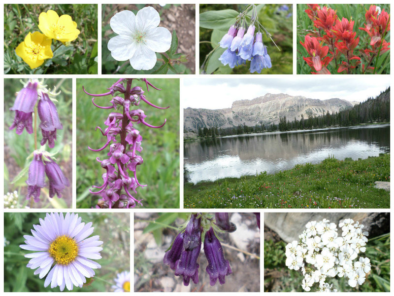 Uinta Beauties on the way to Good Medicine Wall/Ruth Lake