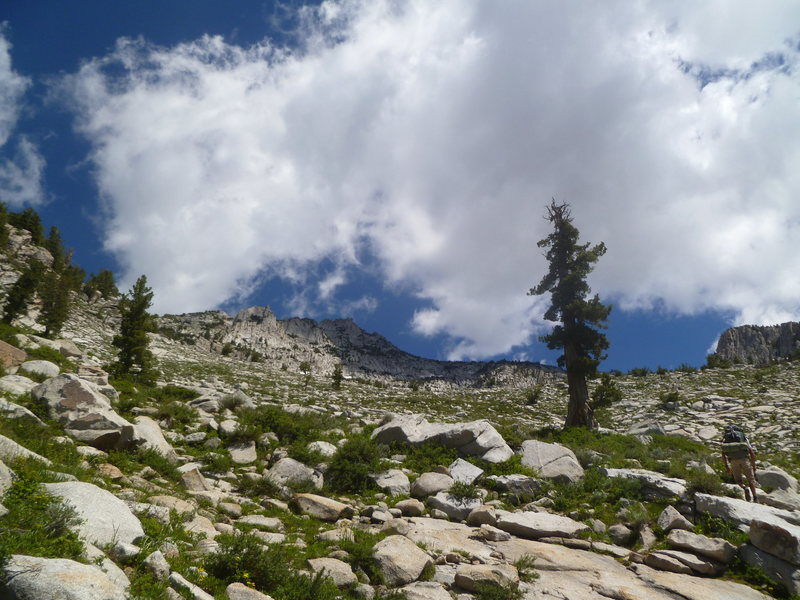 Rock Climbing Photo: I found this tree to be key beta for the Alpine ap...