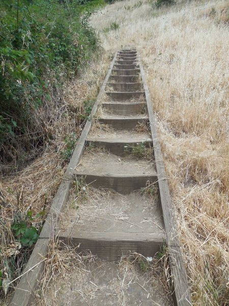 The path to the top of the columns at Skinner's Butte. Watch out for the Poison Oak.