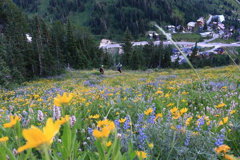 Rock Climbing Photo: Wildflowers on the trail. Photo: Garrett Bentley