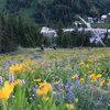 Wildflowers on the trail.<br> Photo: Garrett Bentley