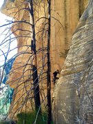 Rock Climbing Photo: Joel on second ascent of Darkside of the Moonshine...