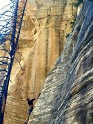Rock Climbing Photo: Joel on Darkside