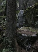 Rock Climbing Photo: The magical forest of the Grand Wall boulders.  Do...