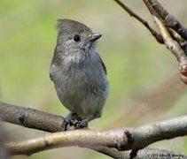 Rock Climbing Photo: A scruffie and friendly bird.