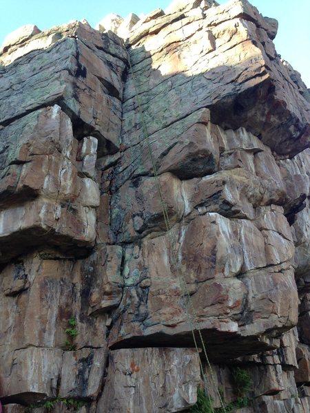 Rock Climbing Photo: Carnivorous Pika