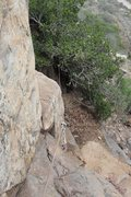 Rock Climbing Photo: Classic tree anchor and the zero cam to protect th...