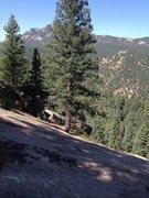 Rock Climbing Photo: The anchor tree.