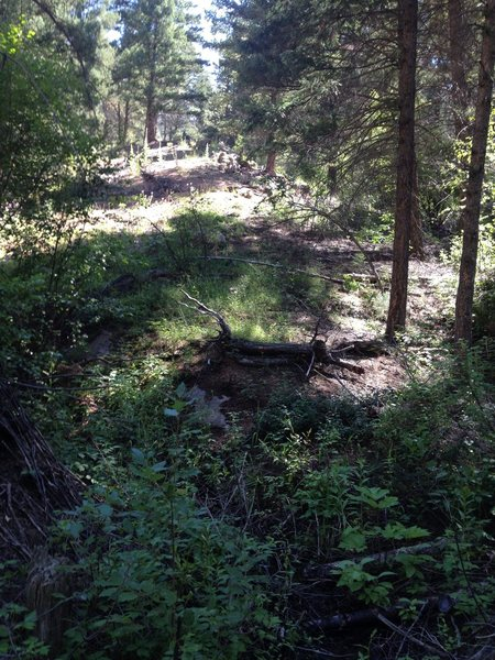 This is the open space I would go up next to the ravine that splits off from the 1st ravine with a small stream.