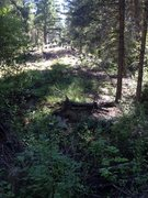 Rock Climbing Photo: This is the open space I would go up next to the r...