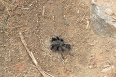 Rock Climbing Photo: I ran into this little guy on my way to the main w...