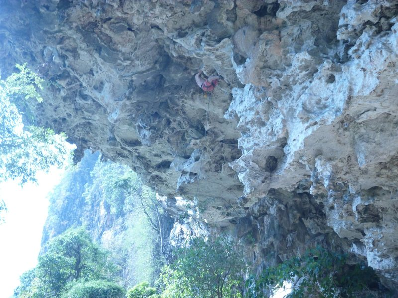 Jungle king. 7b