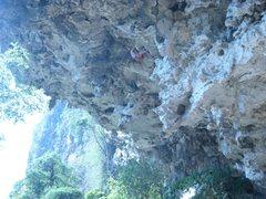 Rock Climbing Photo: Jungle king. 7b