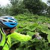 Vegetation near Caldbeck, Cumbria