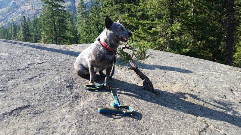 Rock Climbing Photo: tree2