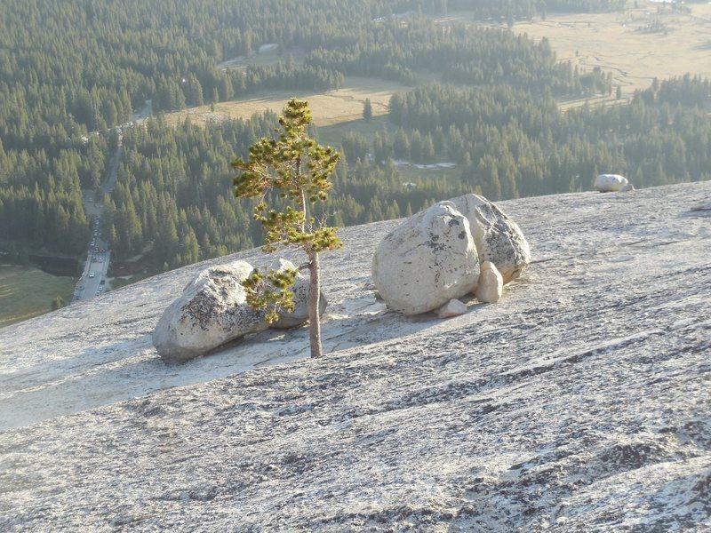 Rock Climbing Photo: Glacial erratics on Lembert Dome.
