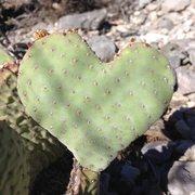 Rock Climbing Photo: Even the cacti love Clark Mountain