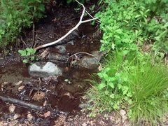 Rock Climbing Photo: Converse Creek in Summer, San Bernardino Mountains