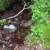 Converse Creek in Summer, San Bernardino Mountains
