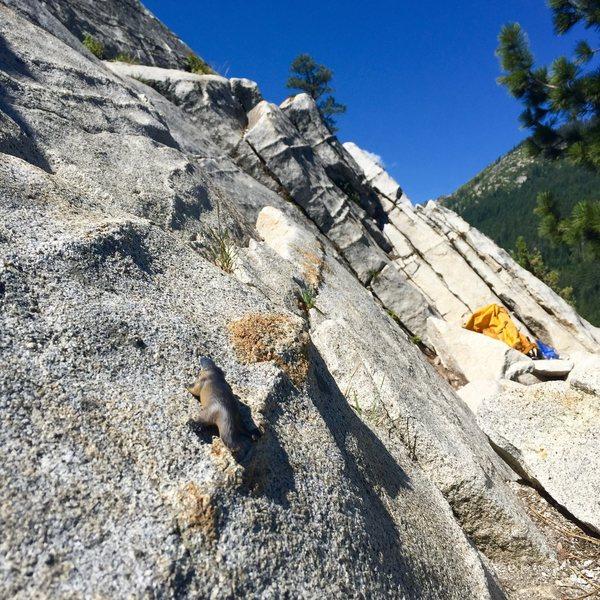Rock Climbing Photo: Putty
