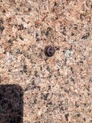 Rock Climbing Photo: 1st hangerless bolt.
