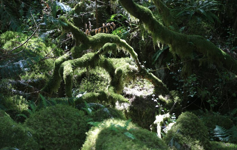 Mossy forest in the Enchanted boulders