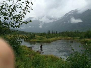 brown bear fishing for salmon on crow pass