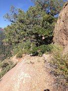 Rock Climbing Photo: The belay tree.