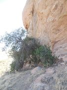 Rock Climbing Photo: Nice scrub oak under the shady north face at North...