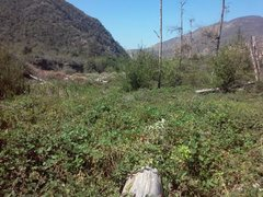 Rock Climbing Photo: Blackberry fields forever, Thurman Flat