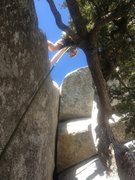 Rock Climbing Photo: None of this tree nonsense is necessary. You can e...
