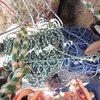 Managing Ropes