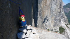 Rock Climbing Photo: Winnie the Poo, hanging out on El Cap Tower