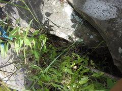 Rock Climbing Photo: A garter snake eating a frog next to Riverside V4.