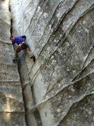 Rock Climbing Photo: Lover's...