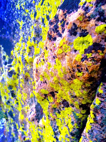 Rock Climbing Photo: Super glow black light lichen!!!