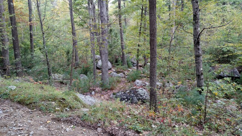 This is the path that leads to the Bob Johnson Boulders. After passing the large lake/marsh and meeting up with the road, walk 2/3 mins uphill up the road, and take a right on this path.