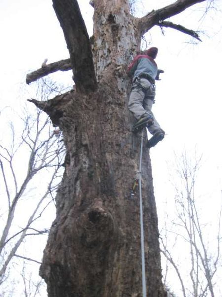 Rock Climbing Photo: On lead.  On wood.