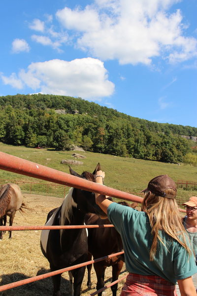 Rock Climbing Photo: HCR horses!